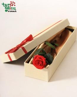 Rožė mano vienintelei