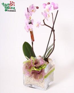 Karališka orchidėja