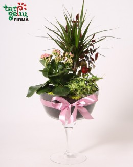 Kompozicija iš vazoninių gėlių