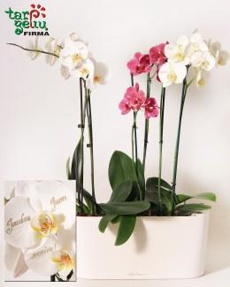 """Už jus """"kalbančios orchidėjos""""!"""