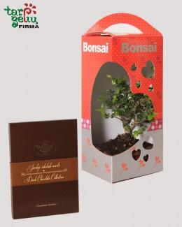Valentino bonsai + šokolado asorti