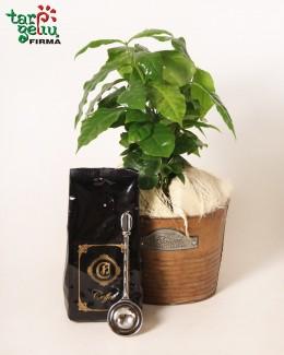 Kavos magija