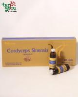 Cordycepsas Sinensis (Kordicepsas)