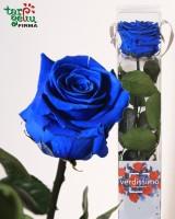 Ilgai žydinti (stabilizuota) rožė