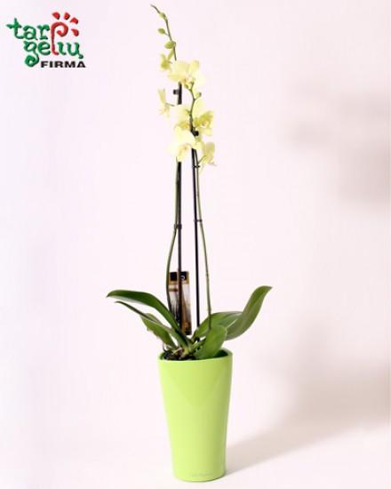 Орхидея и кашпо DELTA