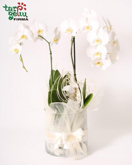 Orchidėjų kompozicija SVAJA