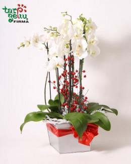 Композиция из oрхидеи ФАНТАЗИЯ