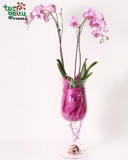 Композиция из oрхидеи РЕТРО