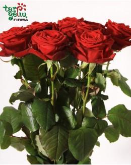 Kрасные розы
