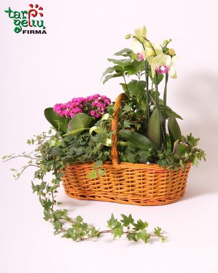 Gėlių kompozicija MYLIMAI MAMAI