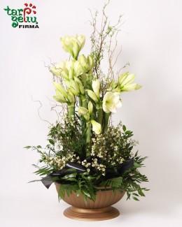 Funeral arrangement AMARYLLIS