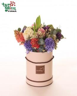 Flower box HYACINTHS