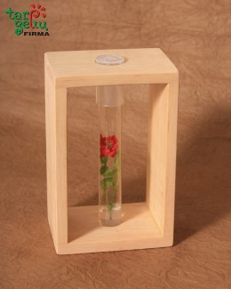 Rose in vitro LABORA