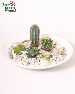 Succulent & cactus composition