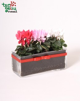 "Arrangement ""Cyclamen"""