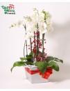 Orchidėjų kompozicija FANTAZIJA