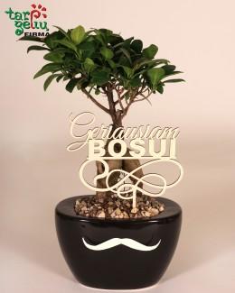 """Bonsai medelis """"Geriausiam Bosui"""""""