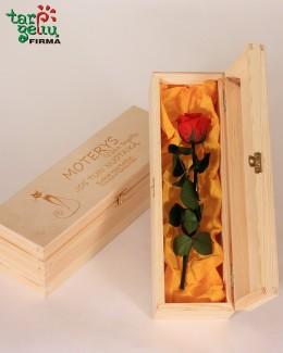 """""""Mieganti"""" rožė dėžutėje"""
