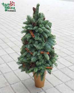 Kalėdinė eglutė iš kenio šakų