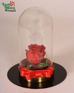 """""""Meilės rožė Jai"""""""