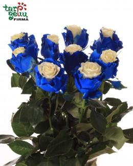 "Mėlyna balta rožė ""Mondial"""