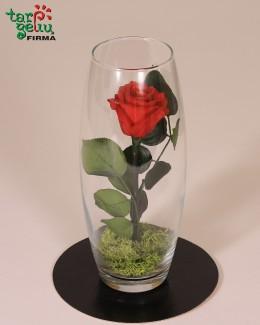 """""""Skinsiu raudoną rožę..."""""""