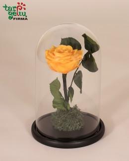 """""""Geltona mieganti rožė"""""""