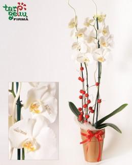 Linkėjimų orchidėja