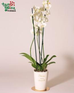 Stilizuota orchidėja - padėka tėvams