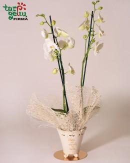 Orchidėja - padėka tėvams