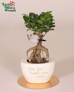Stilizuotas augalas liudininkams