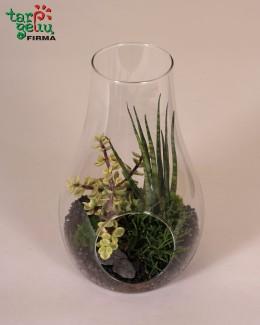 Augalų florariumas