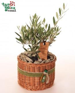 Alyvmedis - dovana iš rojaus