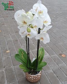 "Orchidėja ""Kartu mes stiprūs"""