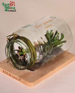 """Florariumas """"Tavo gyvenimo sodas"""""""