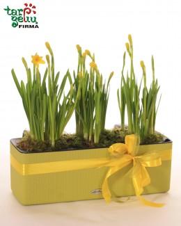 """""""Pavasario spalvos"""""""