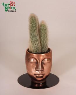 "Kaktuso kompozicija ""Pūkuotos mintys"""