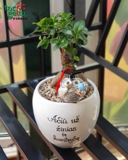Stilizuotas augalas mokytojui