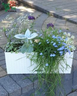 Gėlės ir vazonas BALCONERA Cottage