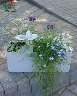 Gėlės ir vazonas BALCONERA Stone