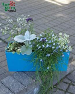 Gėlės ir vazonas BALCONERA Color