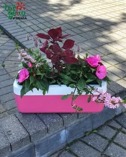 Gėlės ir vazonas