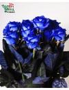 Mėlyna rožė
