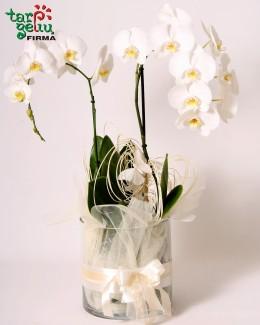 """Композиция из oрхидеи """"Мечта"""""""