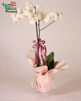 """Композиция из oрхидеи """"Ретро"""""""