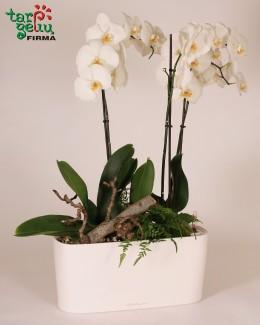 Орхидея и кашпо
