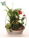 Vazoninių augalų kompozicija