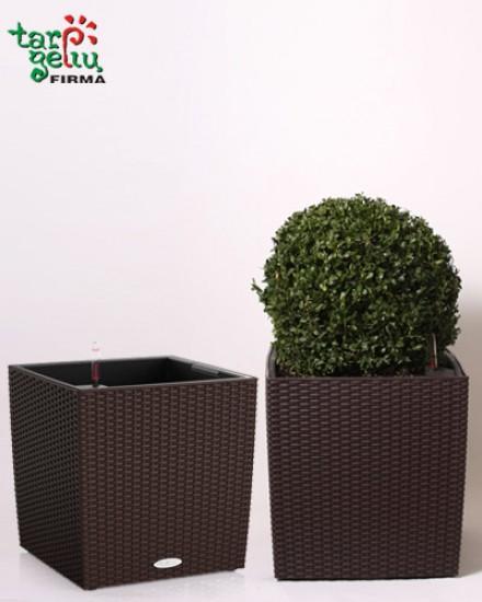 Planter CUBE & Buxus