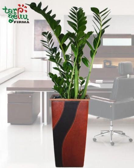 Planter CUBICO & Buxus