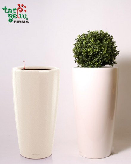 Planter RONDO & Buxus